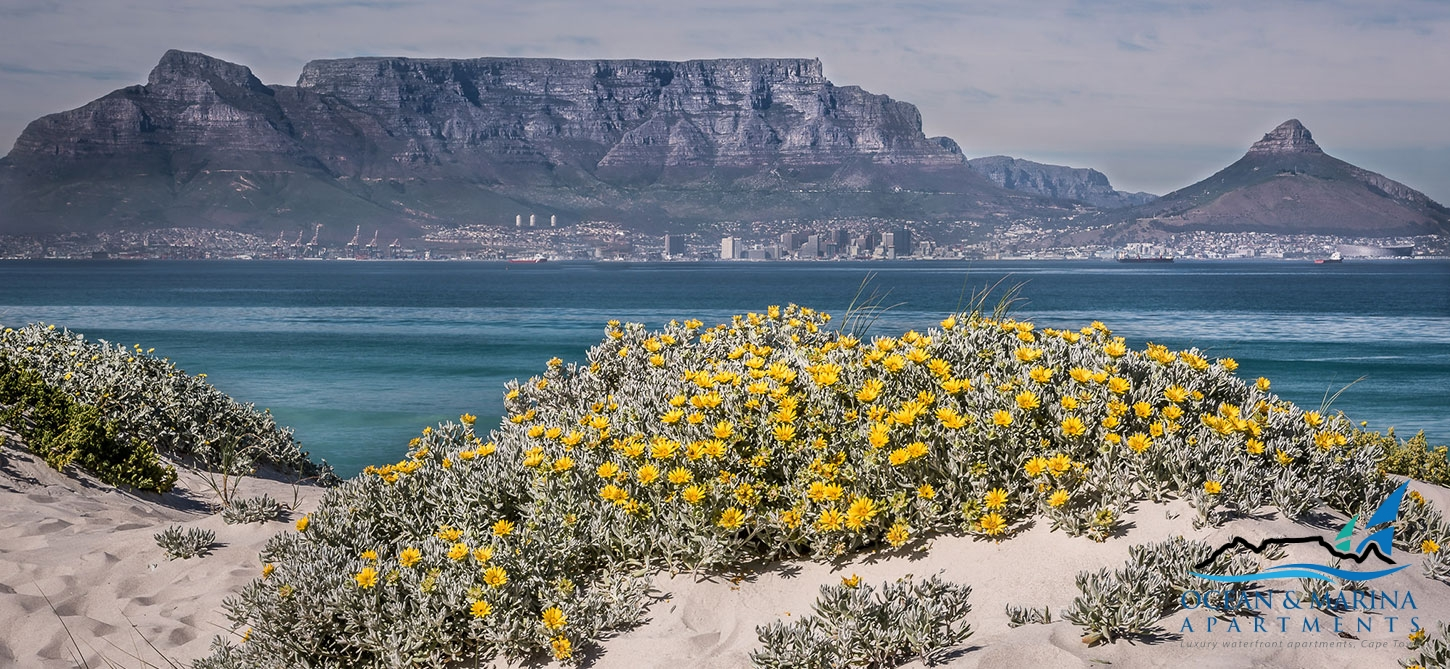 about-blouberg-beach